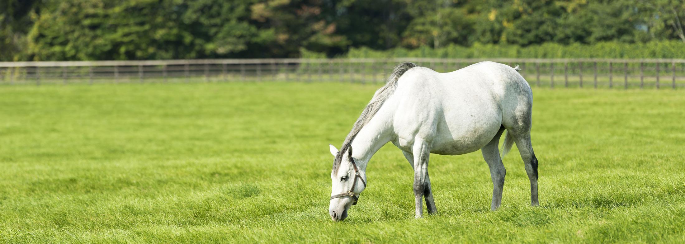 equineslider7