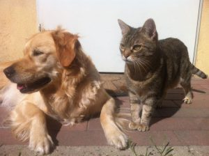 Intestinal Parasites in Dogs & Cats