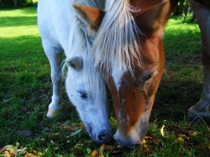 USDA Conducting Census of Agriculture, Including Horses