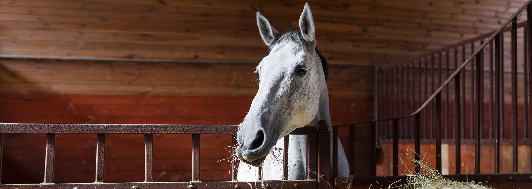 equineslider6-1