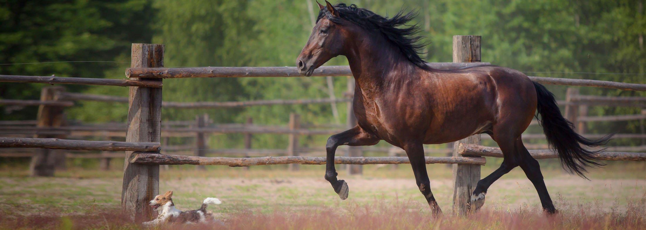 equineslider8-1