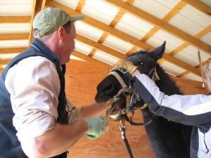 Equine Dentistry in Santa Fe, NM | Cameron Veterinary Clinic
